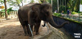 Ο ζωολογικός κήπος της Σαϊγκόν