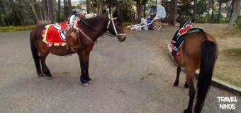 Τα άλογα του Νταλάτ (Dalat), Βιετνάμ