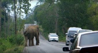 Ελέφαντας σταματάει την κυκλοφορία στην Ταϊλάνδη