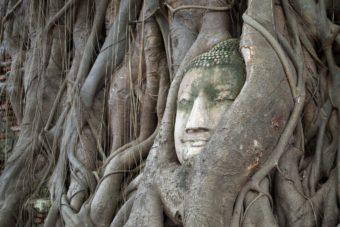 Η κεφαλή του Βούδα, Wat Mahathat στην Αγιούταγια