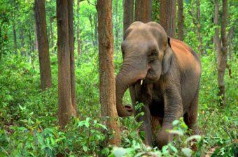 Asian Elephants & Wildlife κανάλι του YouTube