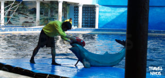 Ο μαγικός κόσμος των δελφινιών στην Ταϊλάνδη