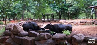 Ο ζωολογικός κήπος της Βορειοανατολικής Ταϊλάνδης