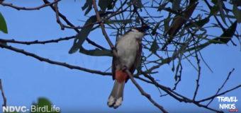 Παρατήρηση πουλιών στο Βιετνάμ από το κανάλι του NDVC – BirdLife Vietnam
