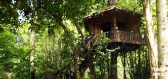 Σπίτια χτισμένα επάνω σε δέντρα στο εθνικό πάρκο Καό Σοκ της Ταϊλάνδης