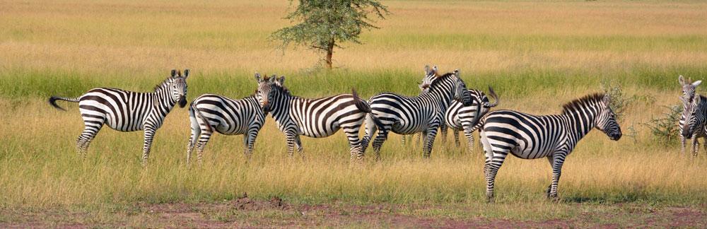 Τανζανία, στο πάρκοΣερενγκέτι (Serengeti National Park)