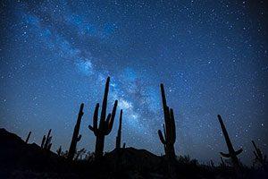 Κάκτοι Cactus
