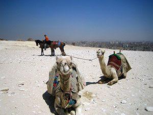 Camel Egypt Αίγυπτος