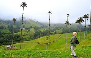 Valle de Cocora, Colombian Andes