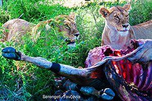 Serengeti, Τανζανία