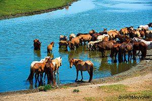 Δυτική Μογγολία, Δημήτρης Μπαλατσούρας, Φωτογραφία
