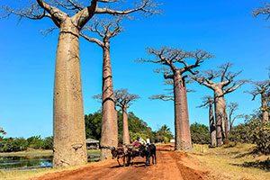 Λίνα Μπαντέκα, Whereislina Baobab