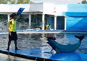 Ενυδρείο, ο κόσμος τως Δελφινιών