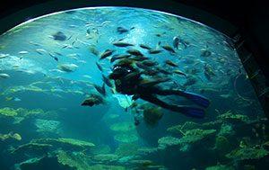 Sea Life Bangkok Ocean World – Ο κόσμος του ωκεανού