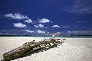 Sulawesi Indonesian island