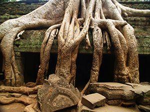 Ναός Ta Prohm