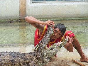 Samutprakan Crocodile Farm and Zoo, Thailand