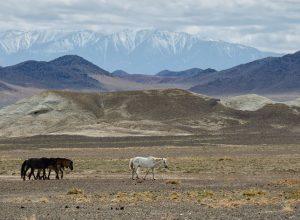 Εθνικό Πάρκο Altai Tavan Bogd στη Δυτική Μογγολία, Κίνα και Ρωσία