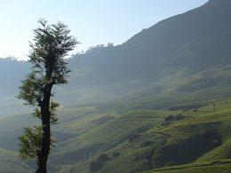 Araku Valley, Visakhapatnam, Andhra Pradesh, India