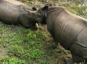 Εθνικό Πάρκο Bardia προστατευόμενη περιοχή στην Terai Νεπάλ