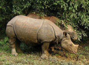 Εθνικό Πάρκο Chitwan στην Terai Lowlands του νότιου-κεντρικού Νεπάλ