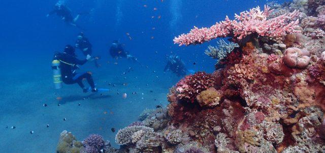 Θαλάσσιο Πάρκο Dongsha Atoll Νησιά Pratas στην Ταϊβάν