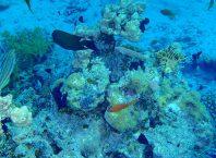 Θαλάσιο Πάρκο Kepulauan Wakatobi Νότιο Sulawesi, Ινδονησία