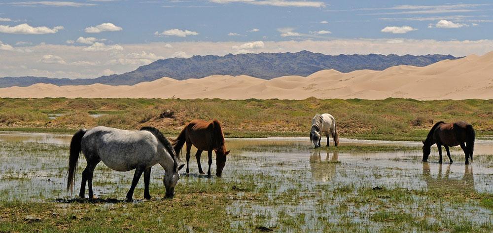 Εθνικό Πάρκο Khustain Nuruu (Hustai), Ποταμός Tuul στη Μογγολία