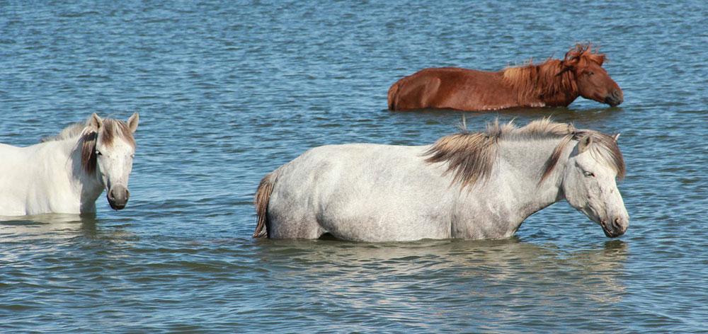 Εθνικό Πάρκο Λίμνης Khuvsgul η μεγαλύτερη λίμνη γλυκού νερού στη Μογγολία