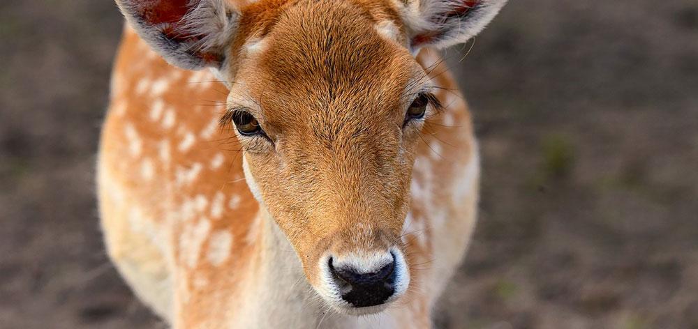 Phibsoo Wildlife Sanctuary in western Sarpang, Bhutan