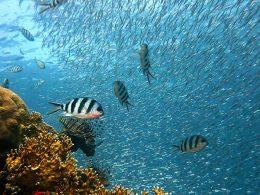 Θαλάσσιο Πάρκο Tubbataha Reefs στις Φιλιππινες