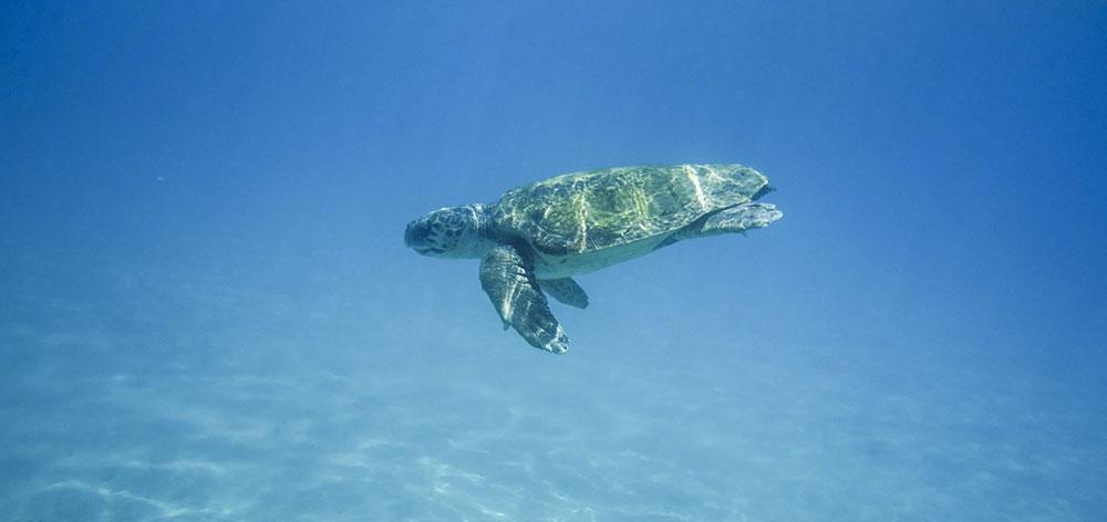 Θαλάσσιο Πάρκο Νησί των χελωνών, θάλασσα Sulu Sabah, Μαλαισία