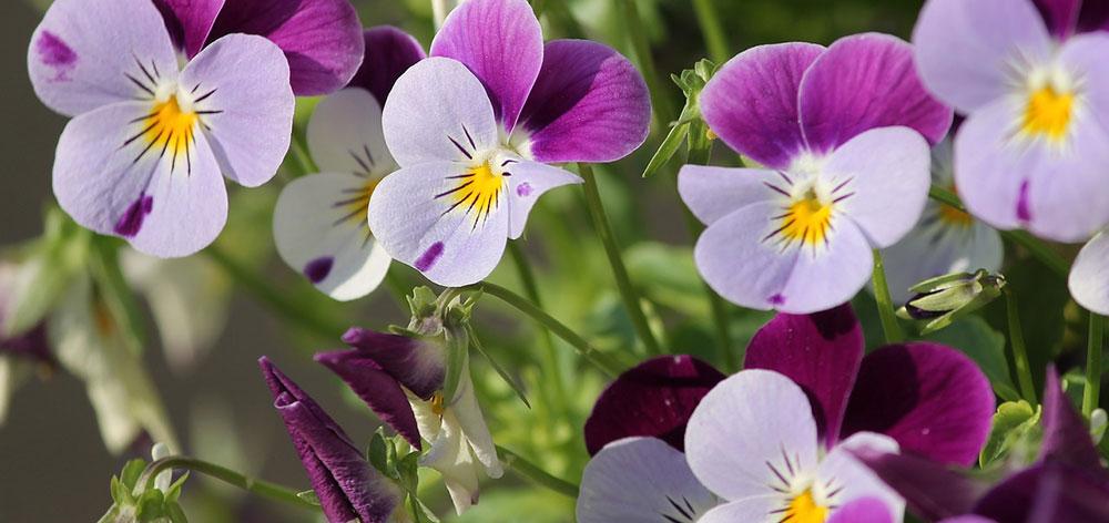 Valley of Flowers National Park, Uttarakhand
