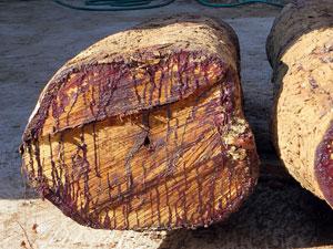 Laos Rosewood